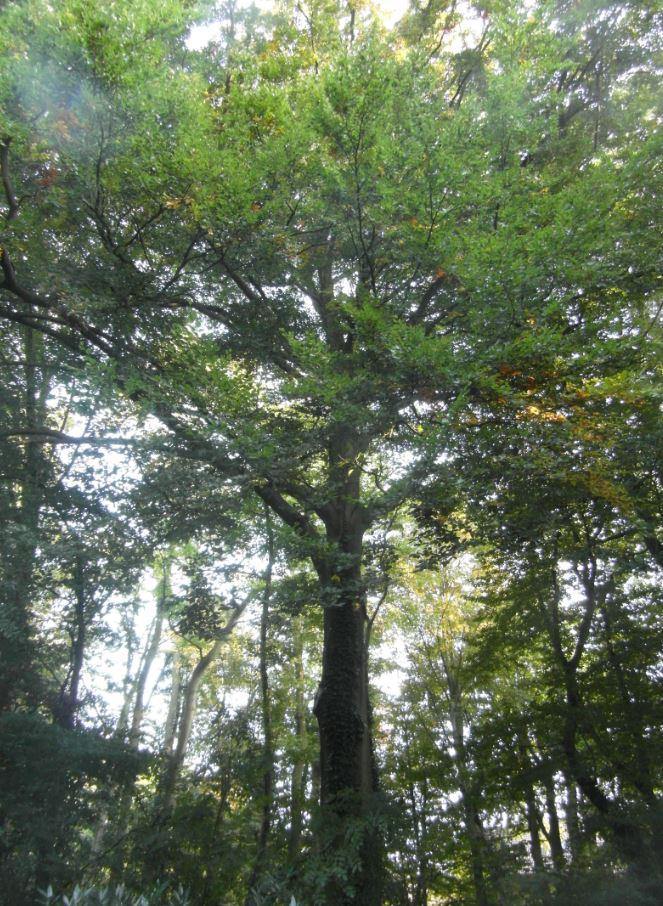 Baum am Naheweg